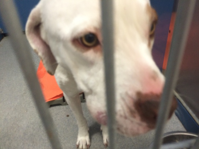 Friends of Wayne County Animals Focus on Lost and Found and Enhanced Adoption Keeps Animals Out of ShelterSystem