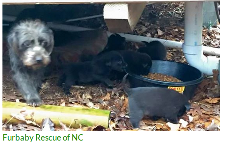 **URGENT** DUMPED MOM WITH 8 BABIES**